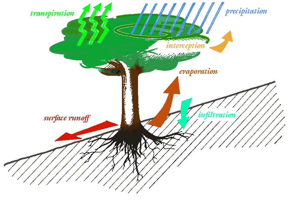 Infiltration and the Water Cycle